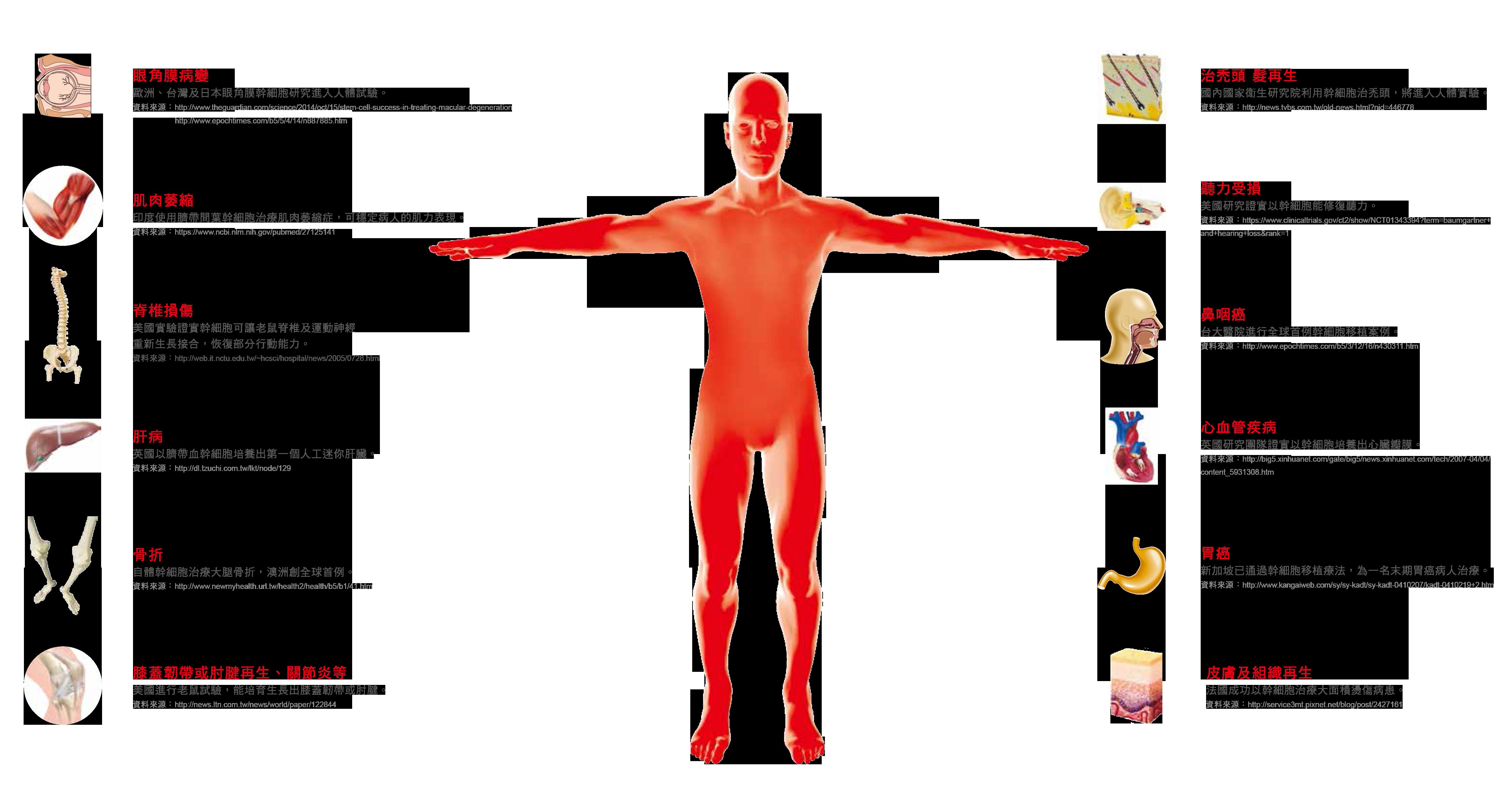幹細胞知識與應用_媽媽教室_幹細胞_成人幹細胞_臍帶血費用_臍帶血公捐_臍帶血功能